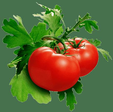 essbar Tomaten